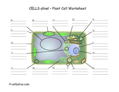 LifeSciTRC.org - Cells alive! - Plant Cell Worksheet