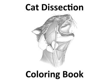 Cat Dissection Coloring Book
